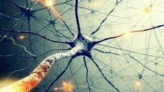 «Нейролинк» Маска придумал, как «поженить» мозг с искусственным интеллектом