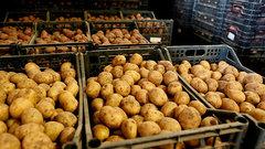 В Курске на ярмарке «Осень-2021» продали 82 тонны картофеля, 55 тонн сахара и 11 тонн мяса