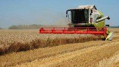 На Кубани собрали 1 млн тонн зерновой кукурузы