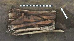 Фигуру птицы и голову лося эпохи неолита нашли в Новосибирской области