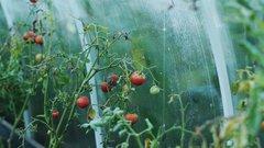 Мнение юриста: можно ли растить на участках ИЖС фрукты и овощи по новым правилам?