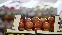 В Краснодарском крае начали строить крупнейшее на юге России фруктохранилище
