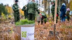 В Югре стартовал проект «Леса России»