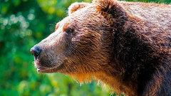 На Ямале медведи посетили городской пляж и рыбацкую сторожку