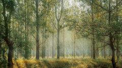 В Чечне восстановят леса на 749 га