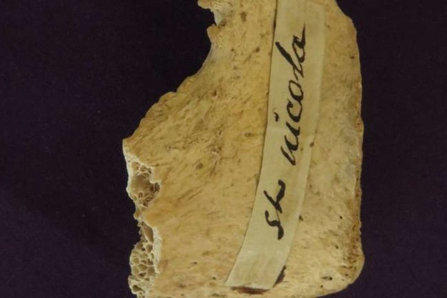 фрагмент кости, проанализированным учеными