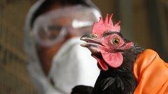 Роспотребнадзор усилил контроль из-за волны птичьего гриппа