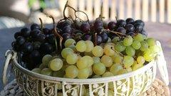 Беда не приходит одна: во Франции погиб урожай винограда