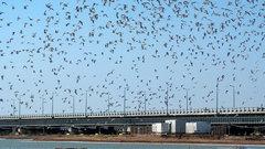 Птицы пропали из центра Ростова из-за коронавируса