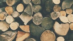 США запустили мировой кризис древесины