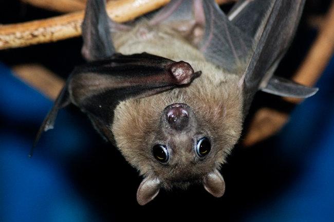 Bat перевод на русский [PUNIQRANDLINE-(au-dating-names.txt) 48