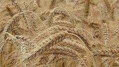 В сельском хозяйстве России тоже грозит сырьевая игла