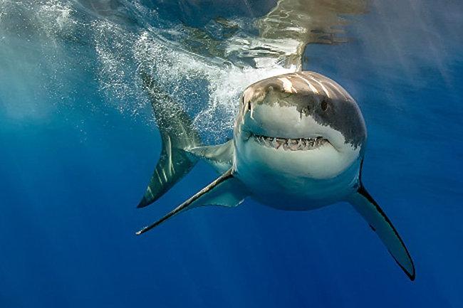 Серийные убийцы в океане: можно ли уберечься от акул
