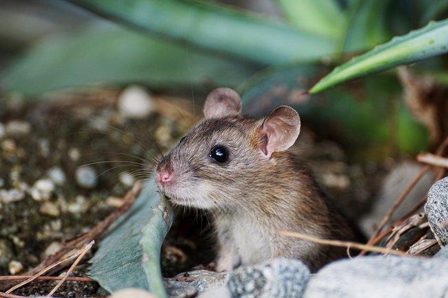 Ученые узнали, что млекопитающие практически вышли изтьмы