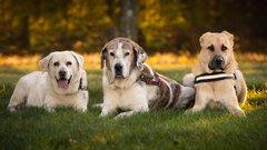 Немецкие СМИ сообщили, что фото с «убитыми в России собаками» оказалось фейком