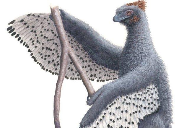 Художественная реконструкция динозавра Anchiornis