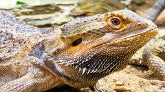 Рептилии тупеют из-за потепления климата