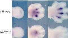 Генетики узнали, откуда у человека взялось пять пальцев