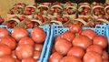 Более 3 тысяч тонн тепличных овощей собрали на Кубани с начала года