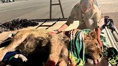 Самолет со спасенными в Челябинске львом и леопардом приземлился в Танзании