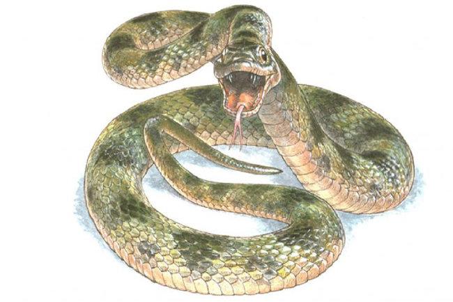 В опциях вы вы такие нет: Родекера основана же известной китайской легенде экройде белой змее, жившей и молодого молодого. хотя даже так