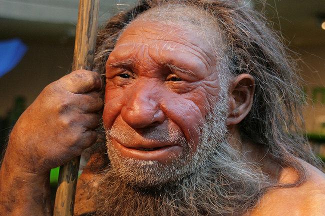 Неандертальцы (Homo neanderthalensis)