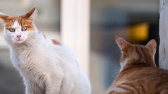Второй в Чувашии приют для бездомных животных откроется 1 мая