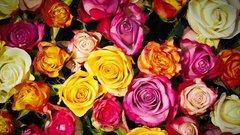Стало известно, насколько подорожали цветы к 8 Марта в Петербурге