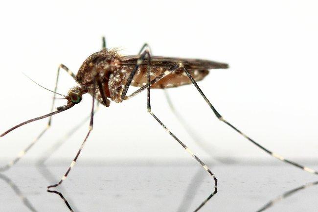 Когда будут комары в 2018
