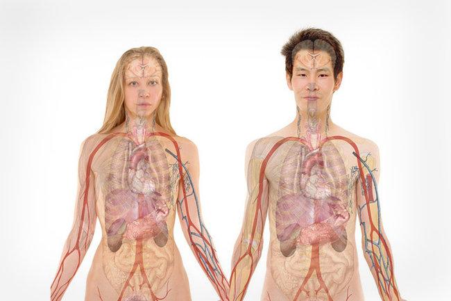 Заболевания почек и мочевыводящих путей: причины, симптомы ...