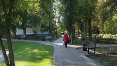 В Воронежской области из-за COVID-19 продезинфицируют парки и скверы