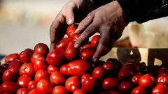 Генетики придумали, как вернуть вкус помидорам