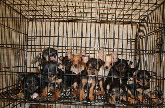 Домашнее разведение животных