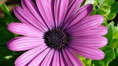 На клумбах в Сочи к началу сезона высадили полмиллиона разных цветов