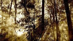 Кировская область стала лидером среди регионов по числу расторгнутых договоров аренды леса