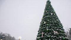 «Горьковская елка» в Нижнем Новгороде заняла три площадки