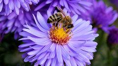 Сегодня пчелы, завтра люди: Россельхознадзор обвинил МЭР в потере контроля над пестицидами