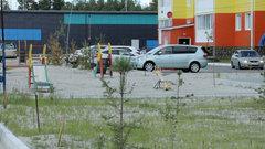 Специалисты «Энерго-газ-Ноябрьск» устранили последствия засора канализации