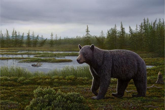 Медведь Protarctos abstrusus (с) Wang et al, 2017
